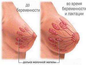 Выделение молозива - норма или патология?