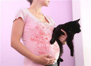 Токсоплазмоз при беременности: диагностика и лечение