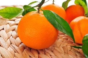 Общие сведения о мандаринах