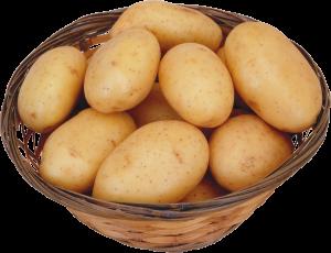 Картофель при беременности: меры предосторожности