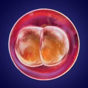 Изменения в организме ребенка во вторую неделю беременности