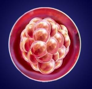 Изменения в организме ребенка на третьей неделе беременности