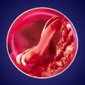 Изменения в организме ребенка на четвертой неделе беременности