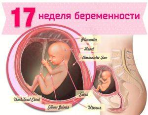 17 неделя беременности: что происходит
