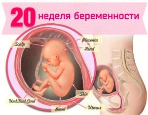 20 неделя беременности: что происходит
