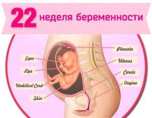 22 неделя беременности: что происходит