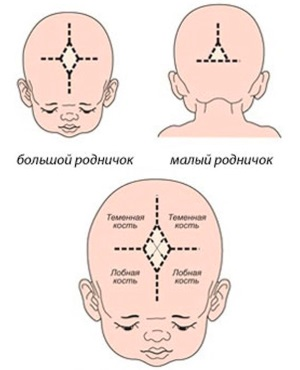 Особенности строения черепа плода на 39 неделе беременности
