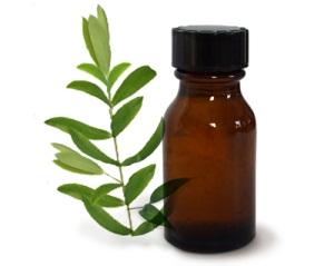 Масло чайного дерева при беременности: показания и противопоказания