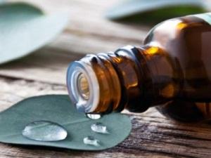 Эвкалиптовое масло для беременных: меры предосторожности