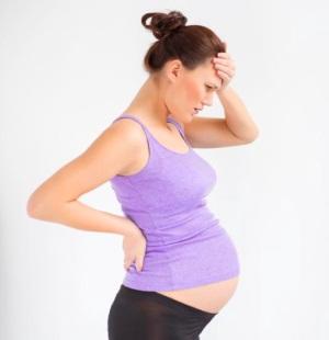 Элеутерококк при беременности: вред и противопоказания