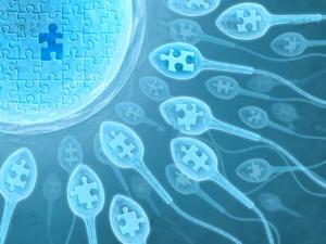 Чем обусловлено успешное зачатие?