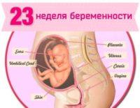 23 неделя беременности: что происходит