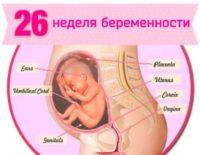 26 неделя беременности: что происходит