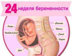 24 неделя беременности - что происходит