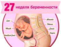 27 неделя беременности: что происходит