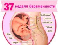 37 неделя беременности: что происходит